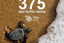 Gerehabiliteerde zeeschildpadden maken een gevierde terugkeer naar huis