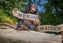 Nieuwe avonturen wachten op de wereldberoemde Jungle Cruise en Disney Imagineers zijn aan boord met meer humor, meer wilde dieren, meer plezier